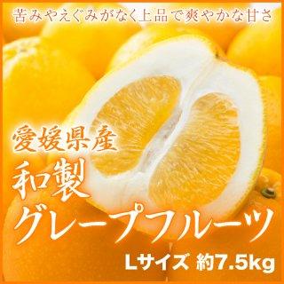 愛媛県産 『和製グレープフルーツ』 秀品(7.5kg) 大玉 Lサイズ 約22玉入り