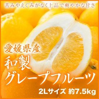 愛媛県産 『和製グレープフルーツ』 秀品(7.5kg) 大玉 2Lサイズ 約18玉入り