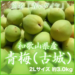 JA紀南 和歌山県産 青梅 秀品 2L 3kg 【調理レシピ付き】