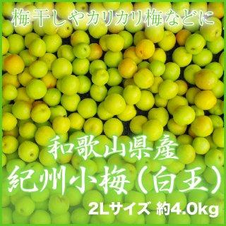 JA紀南 和歌山県産 紀州小梅 秀品 2L 4kg 【調理レシピ付き】
