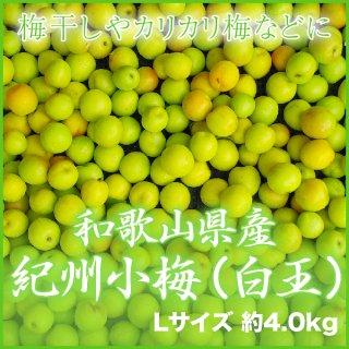 JA紀南 和歌山県産 紀州小梅 秀品 L 4kg 【調理レシピ付き】
