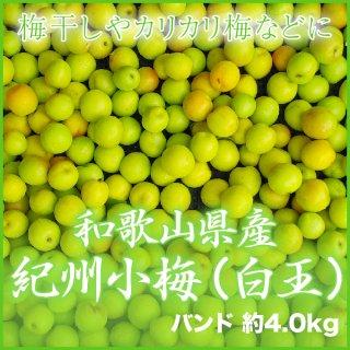 JA紀南 和歌山県産 紀州小梅 秀品 大きさおまかせ 4kg 【調理レシピ付き】