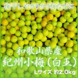 JA紀南 和歌山県産 紀州小梅 秀品 L 2kg 【調理レシピ付き】
