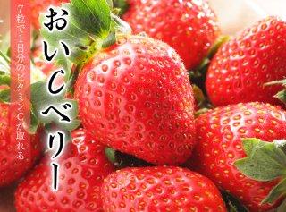 おいCベリー  大粒 12〜15粒  約450g   岡山県産 いちご 化粧箱入り