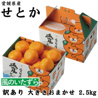 みかん せとか みきゃん箱入り 風のいたずら 訳あり 3L〜M 2.5kg 愛媛県 中島産  ミカン 蜜柑 贈り物