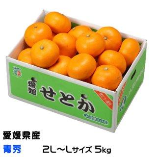 みかん せとか 青秀 3L〜M 5kg 愛媛県 中島産  ミカン 蜜柑 ギフト 贈り物