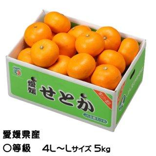 せとか ◯等級  2L〜Lサイズ 約5kg  愛媛県産  JAえひめ中央 中島選果場 送料無料 みかん