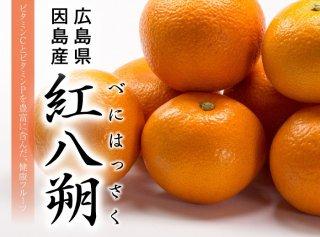 紅八朔  青秀 Lサイズ  約10kg 広島県産 JA尾道市 因島選果場 送料無料 はっさく
