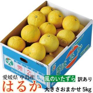 みかん はるか 風のいたずら 訳あり  大きさおまかせ 5kg 愛媛県 中島産