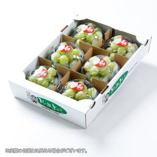 ぶどう 桃太郎ぶどう 詰み落とし 青秀 約200g×6パック 岡山県産 香川県産 葡萄 ブドウ