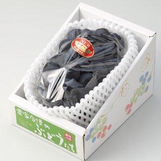 ぶどう ニューピオーネ 特秀 800g×1房 岡山県産 JAおかやま 葡萄 ブドウ