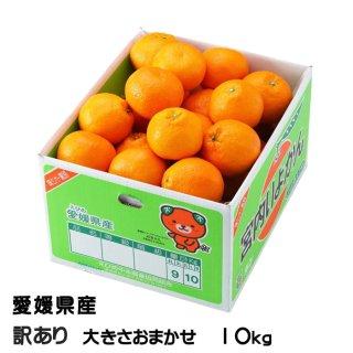 みかん 宮内伊予甘 風のいたずら 訳あり 2L〜L 10kg JAえひめ中央 中島産 ミカン 蜜柑 いよかん