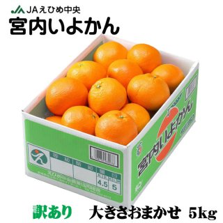 みかん 宮内伊予甘 風のいたずら 訳あり 2L〜L 5kg JAえひめ中央 中島産 ミカン 蜜柑 いよかん