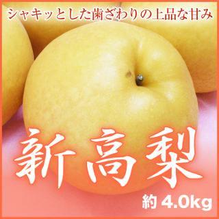 岡山県産 新高梨 大玉 4玉〜6玉 (約4.0kg)