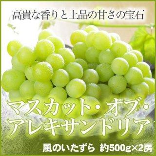 岡山県産 『マスカット・オブ・アレキサンドリア』 風のいたずら(ちょっと訳あり) 2房 (約500g×2)