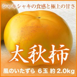 太秋柿 風のいたずら 6玉 約2.0kg