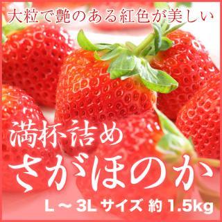 岡山県産 いちごの満杯詰め さがほのか L〜3Lサイズ 約1.5kg