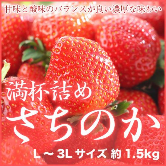 岡山県産 いちごの満杯詰め さちのか L~3Lサイズ 約1.5kg