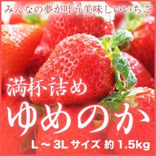 岡山県産 いちごの満杯詰め ゆめのか L〜3Lサイズ 約1.5kg