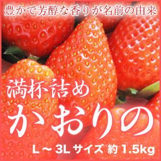 岡山県産 いちごの満杯詰め かおりの L〜3Lサイズ 約1.5kg