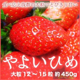 岡山県産 いちご 『やよいひめ』 大粒 12〜15粒 (約450g) 化粧箱入り