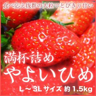 岡山県産 『いちごの満杯詰め』 (やよいひめ) L〜3Lサイズ (約1.5kg)
