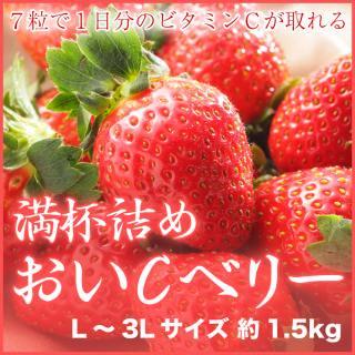 岡山県産 『いちごの満杯詰め』 (おいCベリー) L〜3Lサイズ (約1.5kg)