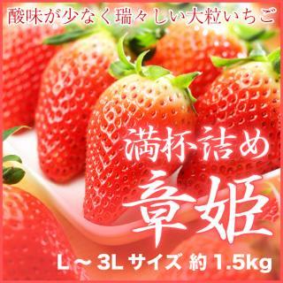 岡山県産 いちごの満杯詰め 章姫(あきひめ) L〜3Lサイズ 約1.5kg