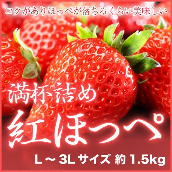 岡山県産 『いちごの満杯詰め』 (紅ほっぺ) L~3Lサイズ (約1.5kg)