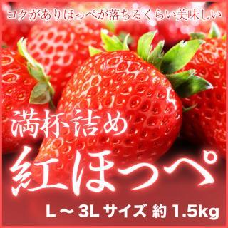 岡山県産 『いちごの満杯詰め』 (紅ほっぺ) L〜3Lサイズ (約1.5kg)