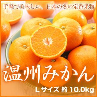 徳島県産 本貯蔵みかん Lサイズ 約10.0kg 箱入り