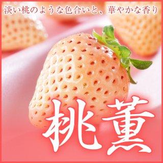 岡山県産 いちご 『桃薫』 3L〜4L 12〜15粒 (約450g) 化粧箱入り