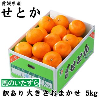 みかん せとか 風のいたずら 訳あり 4L〜L 5kg 愛媛県 中島産  ミカン 蜜柑 ギフト 贈り物