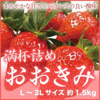岡山県産 『いちごの満杯詰め』 (おおきみ) L〜3Lサイズ (約1.5kg)