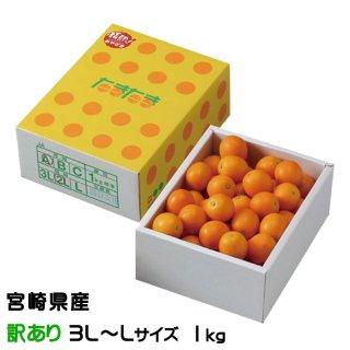きんかん たまたま 完熟きんかん 風のいたずら 訳あり 3L〜Lサイズ 1kg 宮崎県産 キンカン 金柑