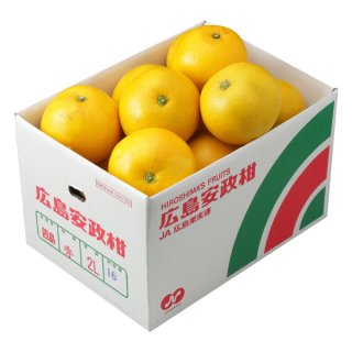 安政柑 秀品 大きさお任せ 約10kg 広島県(因島産)  3月下旬ころより発送予定