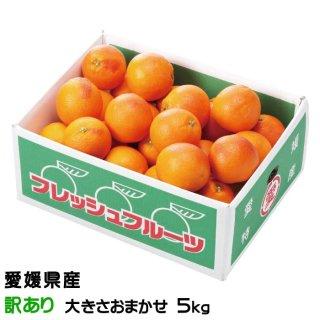 愛媛県 (中島産) 『タロッコオレンジ)』 (ブラッドオレンジ) 秀品大玉2L〜 Lサイズ 約20〜25玉入り (約5.0kg)