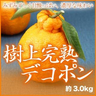 樹上完熟デコポン 葉付き Lサイズ 15玉 約3.0kg 化粧箱入り えひめ県産
