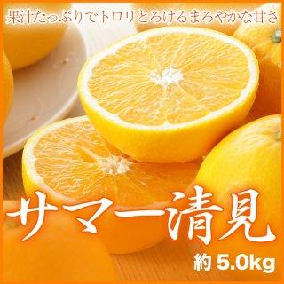 『中島だより』JAえひめ中央 『サマー清見』 秀品 2L 約20玉入り (約5.0kg)