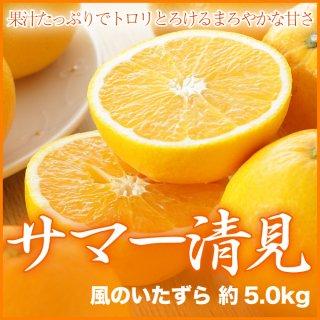 広島県産 サマー清見(かがやき) 風のいたずら 約5.0kg 大きさ、数はおまかせ下さい