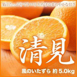 愛媛県産 清見 風のいたずら 約5.0kg 大きさ、数はおまかせ下さい