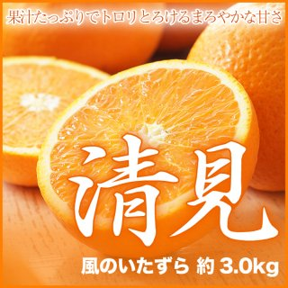 愛媛県産 清見 風のいたずら 約3.0kg 大きさ、数はおまかせ下さい