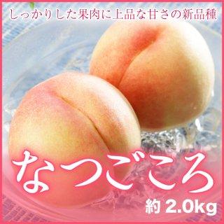 岡山県産 (一宮地区) 新品種 白桃 『なつごころ』 7〜9玉入 (約2.0kg) 化粧箱入り (7月中旬より発送)