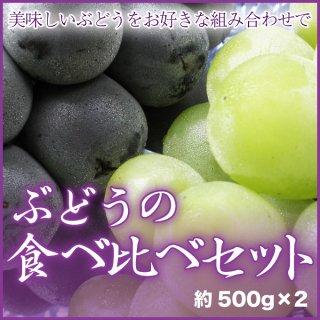 品種が選べる 『ぶどうの食べ比べセット』 2房(約500g×2)