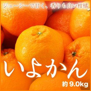 JAえひめ中央 (中島産) 『宮内いよかん』 秀品 4Lサイズ 約9.0kg