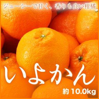 宮内伊予甘  赤秀 2L〜Lサイズ 約10kg   JAえひめ中央 中島産 送料無料