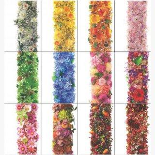 ポストカード 「季節の花」12枚セット