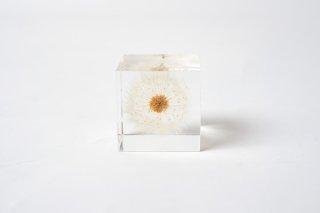 ウサギノネドコ sora cube タンポポ 4cm角