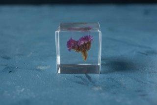 ウサギノネドコ sola cube スターチス