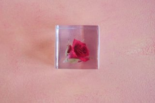 ウサギノネドコ sola cube バラ